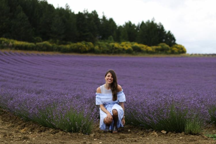 lavender (5 of 11)